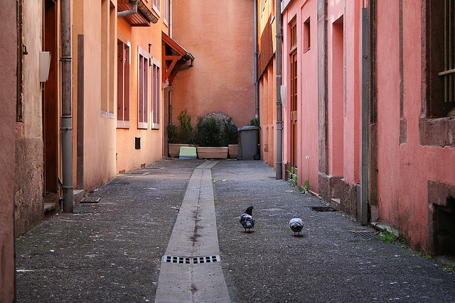 Backyard and two pigeons, Colmar, France