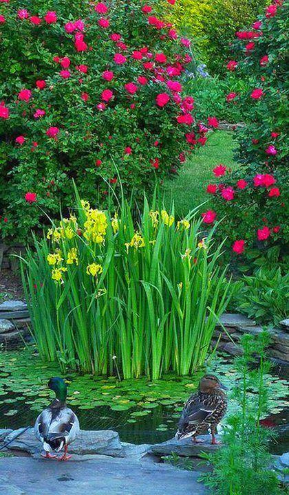 Beautiful Backyard Ponds : Beautiful garden and pond  gardening  Pinterest