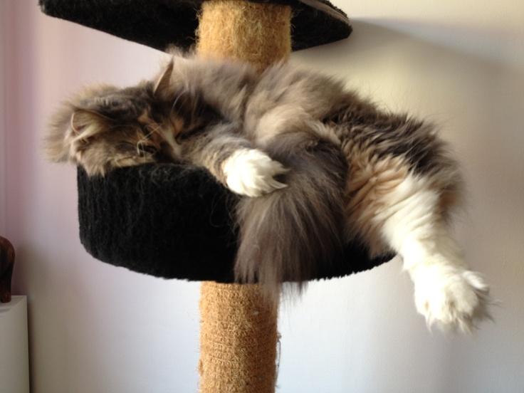 Big cat - little bed :)