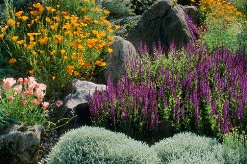 mediterranean landscape plants garden oasis pinterest