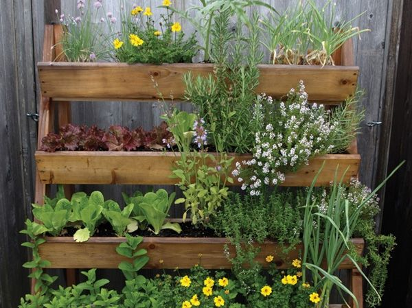 Pin By Janice Carey On Vertical And Patio Vegetable