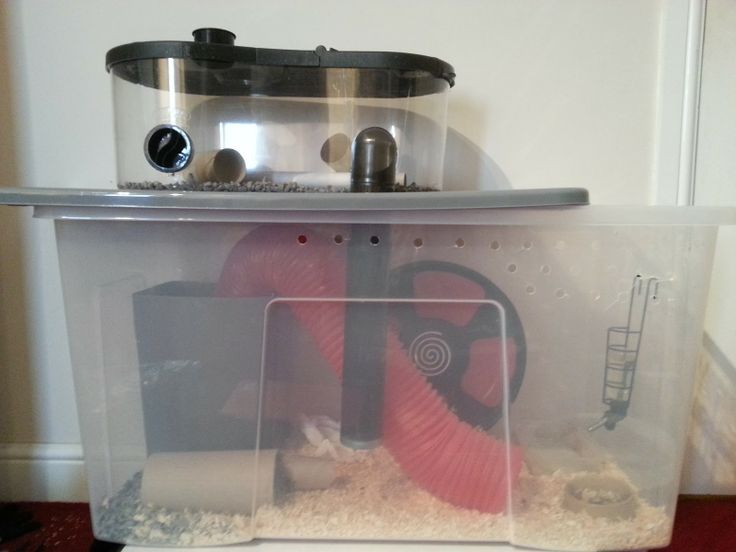 Diy hamster bin cage future pets pinterest for How to make a diy hamster cage