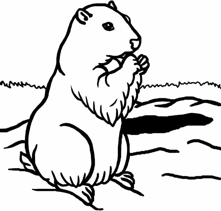groundhog coloring pages - photo#18