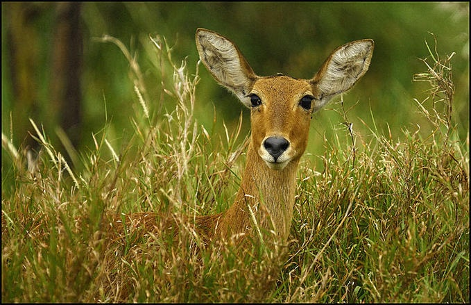 La Biche | Deers | Pinterest