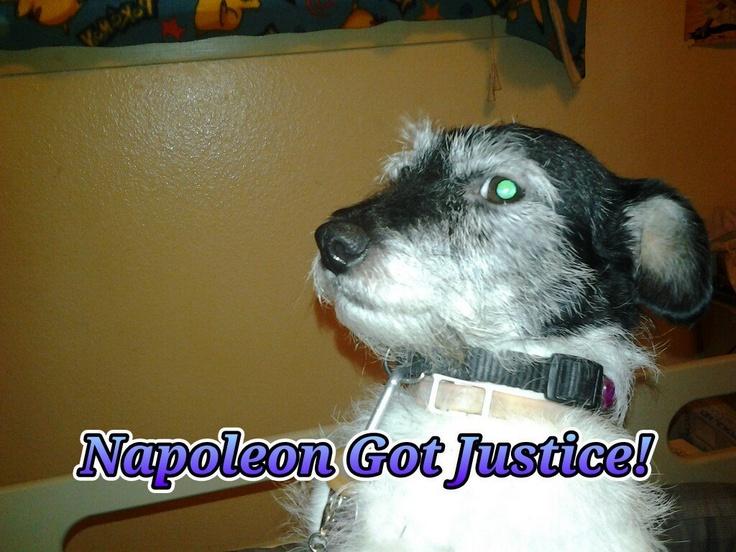 Praise God! Justice for Travis Alexander's pooch Napoleon!