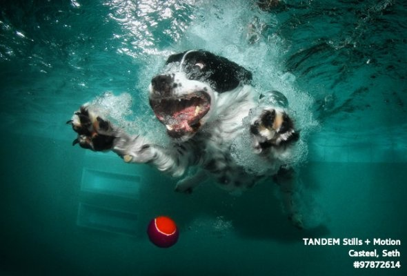 Underwater Pets : These Images Of Dogs Diving Underwater Are Terrifying And Bewitching