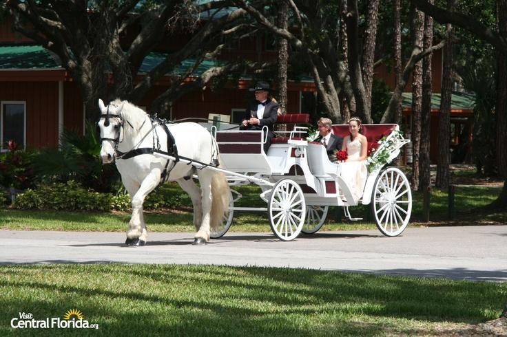 Central Florida Wedding Carriage