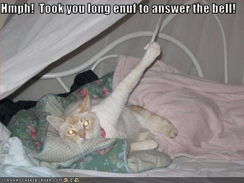"""Hmph! Took you long enuf to answer the bell!"" # cat, funny"