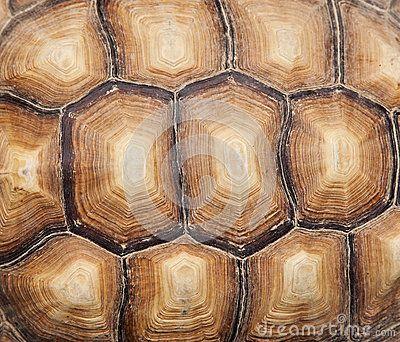 Tortoise Shell | Patterns / Les Motifs | Pinterest