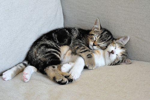 Imagenes de gatitos abrazados - Imagui