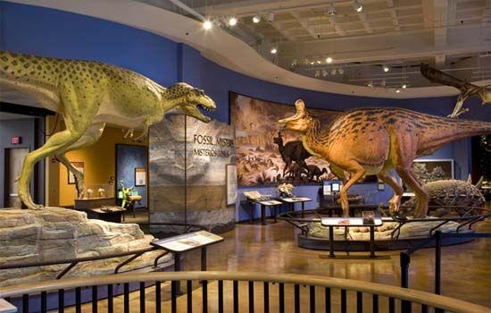 museum of natural history essay