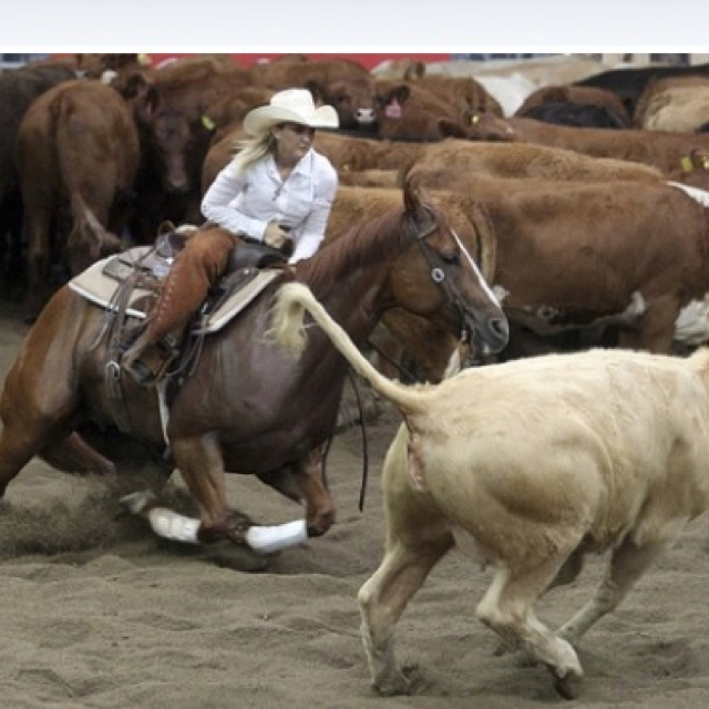 Cutting. #Rodeo #Cowgirl #Cattle | Life out West | Pinterest