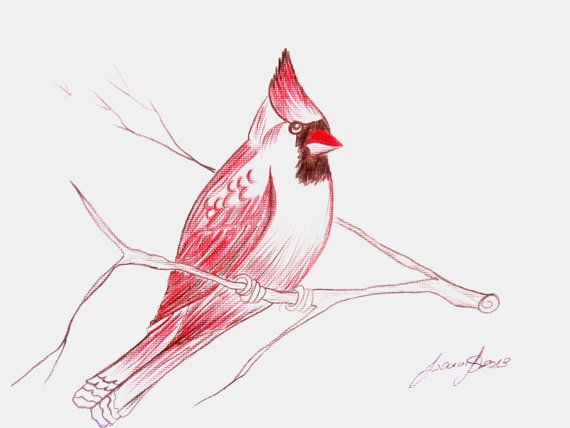 Cardinal Bird Drawing Cardinal bird art pencil drawing on fat paper by ...