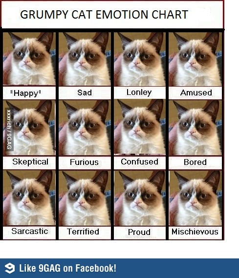 cat emotions how to read