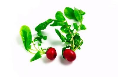 How to Grow Radishes in a Pot
