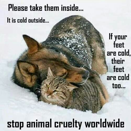 During cold weather please remember to care for your pets. They are depending on you.