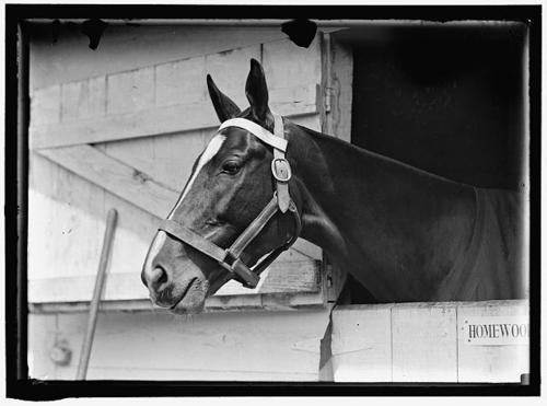 Vintage horse photo.