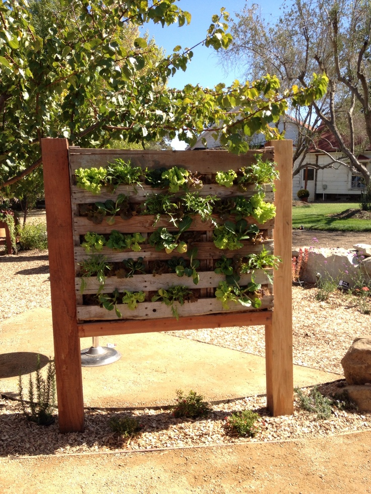 Pallet vertical garden garden diy pinterest for Vertical pallet garden