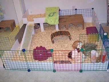 how to make a homemade guinea pig cage
