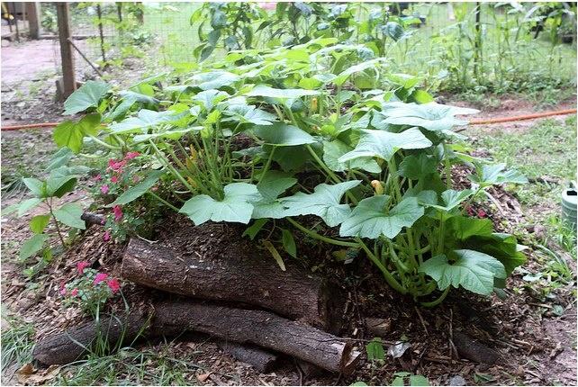 A Simple Hugelkultur Garden Bed Hugelkultur Pinterest