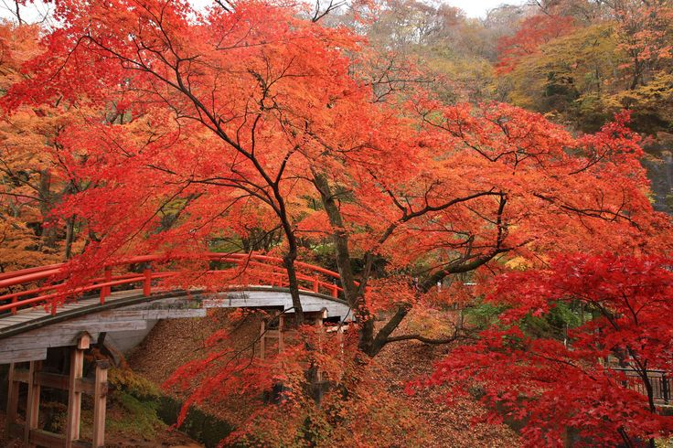 Shibukawa Japan  city pictures gallery : Red Leaves Shibukawa Gunma Japan | Japan | Pinterest