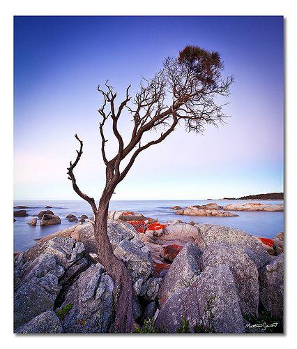 Binalong Bay Australia  city photos gallery : Binalong Bay Tree, Tasmania, Australia   TREES!!!!!   Pinterest