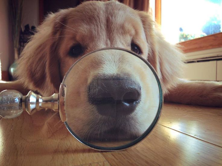 Have a magnify-cent Monday everyone!
