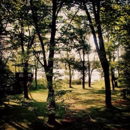 pretty backyard | greener pastures | Pinterest
