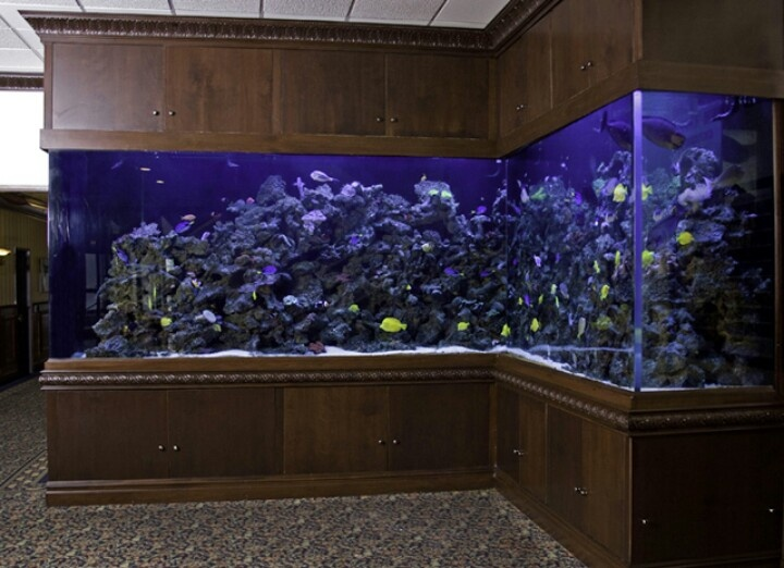 Tanked tanked pinterest for Fish tank show