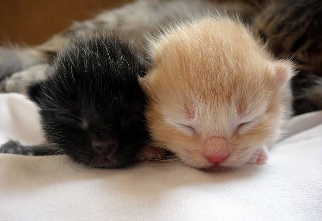 cute new born kittens sleeping | newborn kittens | Pinterest
