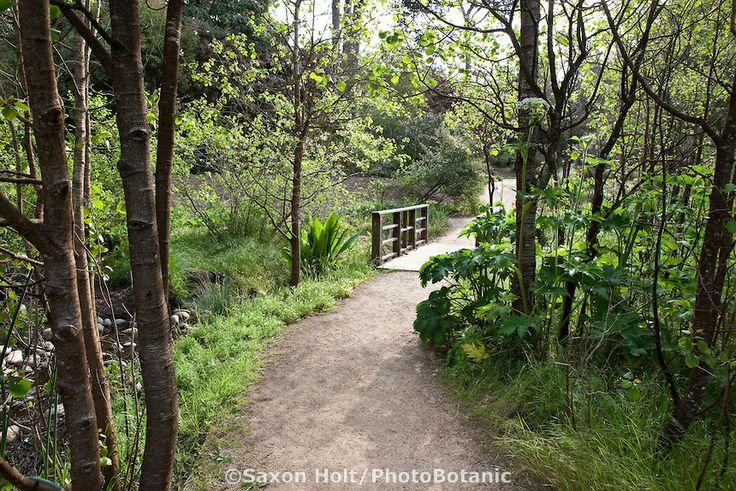 San Francisco Botanical Garden San Francisco Dreaming Pinterest