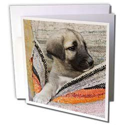 middle eastern turkey dogs middle east turkey cappadocia dog poster ...