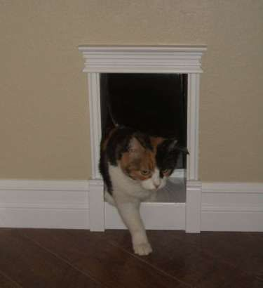 custom cat door interior. So cute!