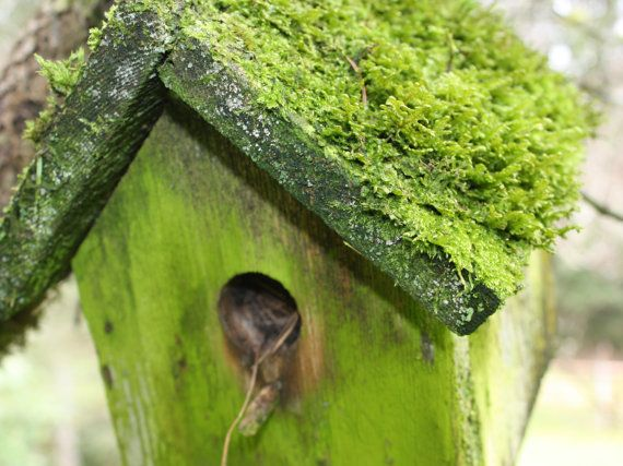 Bright Green House Bird House Photograph Bright Green Moss 8x10 Photograph Home Decor