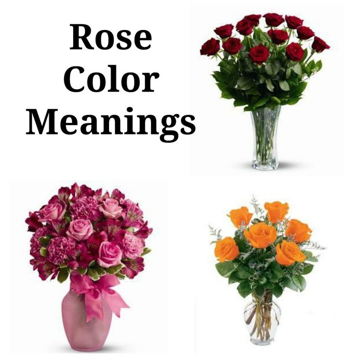 Rose Color Meaning  Flower Meaning
