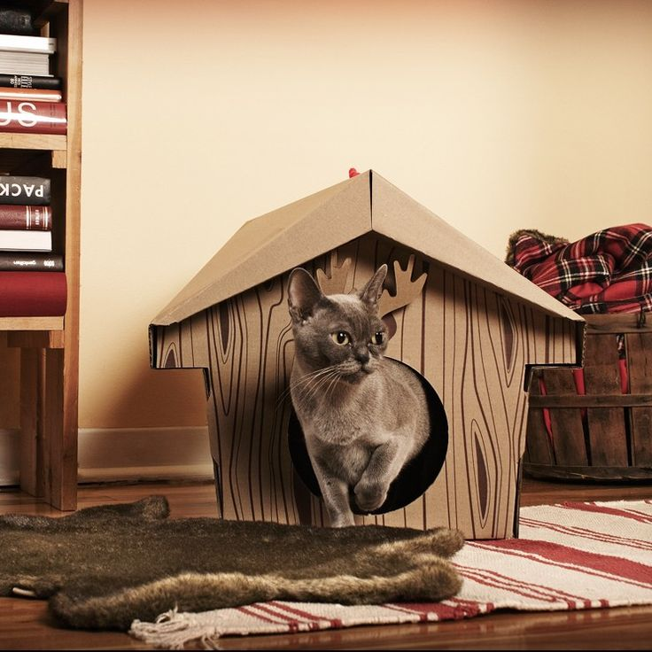 Canadian Cabin $24.00 #canadian #cat