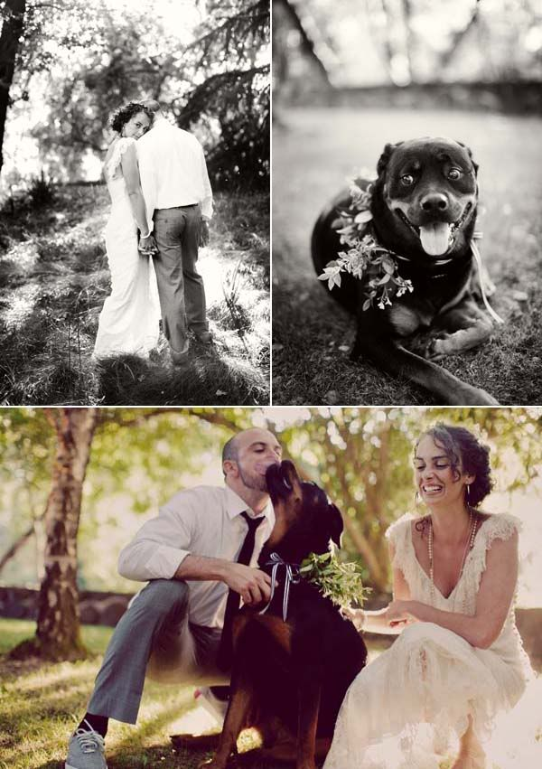 want my dog in the wedding photos, too..... | Family Photography ...