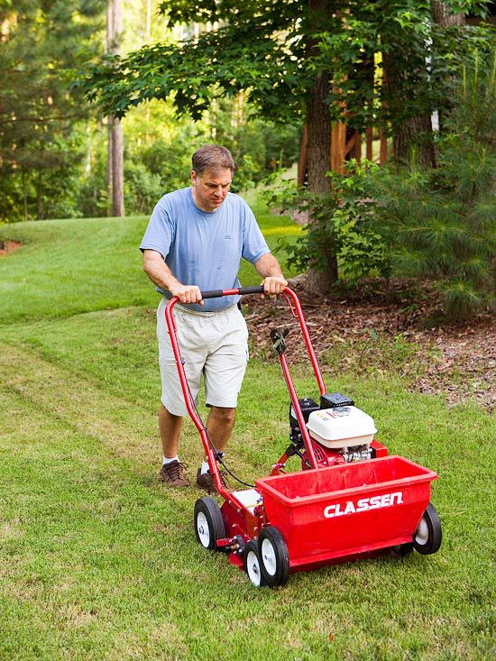 What needs to be done to the lawn in the fall: Overseed
