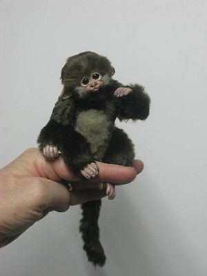 Ooak baby fairy monkey marmoset handmade fantasy artist bear by