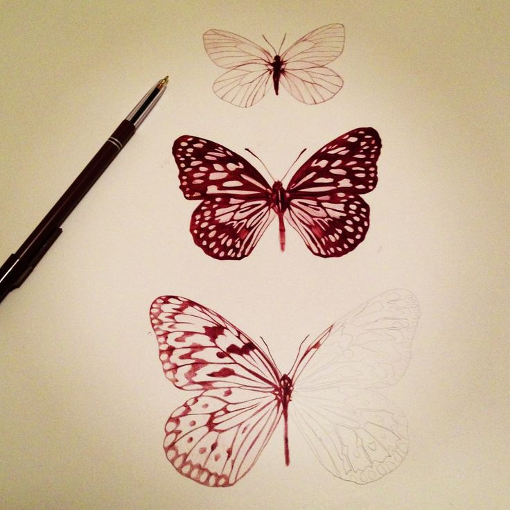 butterfly drawing | Wow Pretty - 70.8KB