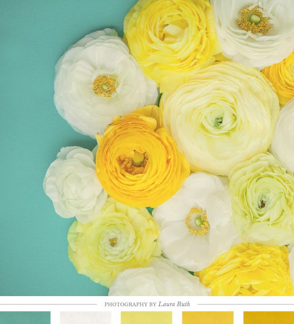 Color Inspiration Daily: 05. 20. 13 // via creature comforts // Altogether – Photographic Print by Laura Ruth // flowers, ranunculus, yellow, white, ivory, lemon, petals, nature, laura ruth, teal