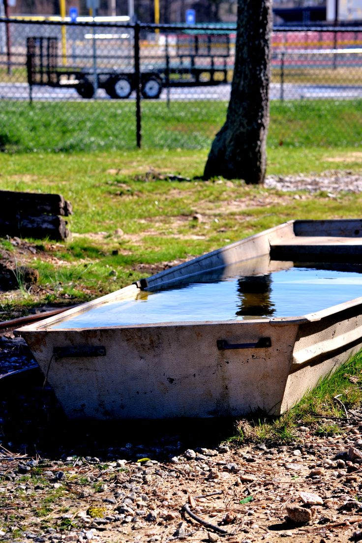 Pictures Of Backyard Duck Ponds : Duck Pond  Nancys Photography  Pinterest