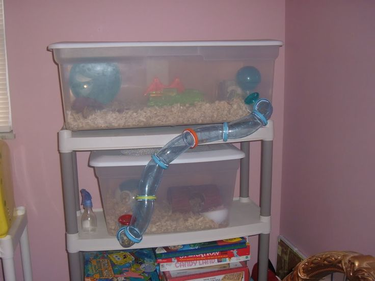 Hamster bin cage animals pinterest for How to build a hamster cage
