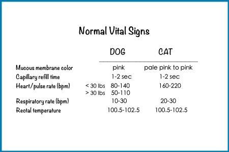 Cat Regular Vet Checks