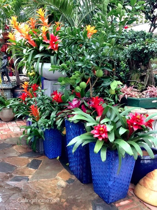 Tropical containers container gardening pinterest - Tropical container garden ...