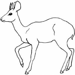 ... or Deer Coloring S...