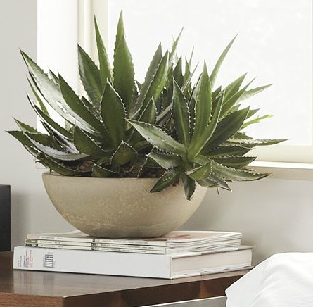 Nice desk plant indoor plants planters pinterest - Nice indoor plants ...