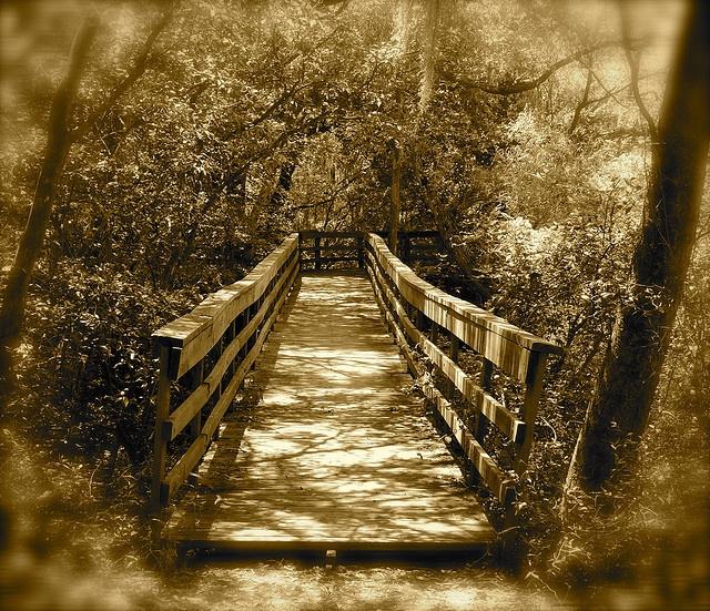 nature bridge   I Wanna Go There   Pinterest