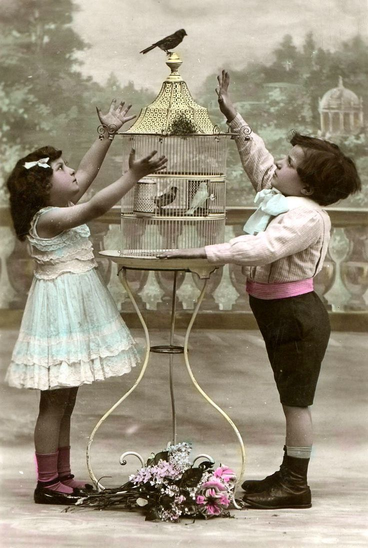 old photo postcard, catch the birdie