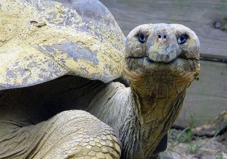 Image result for turtle days